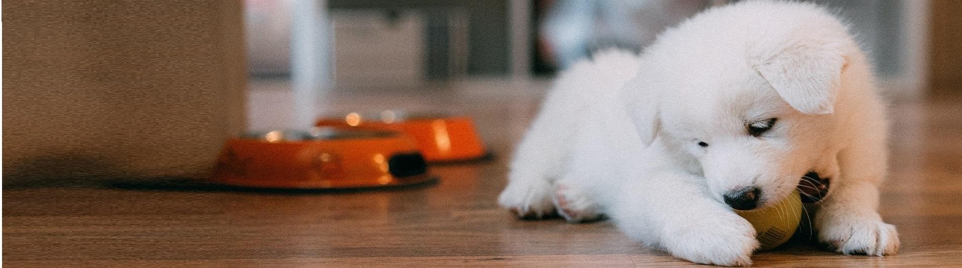 Accesorii - Pet Shop